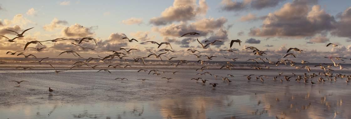 Verdensdagen for trækfugle