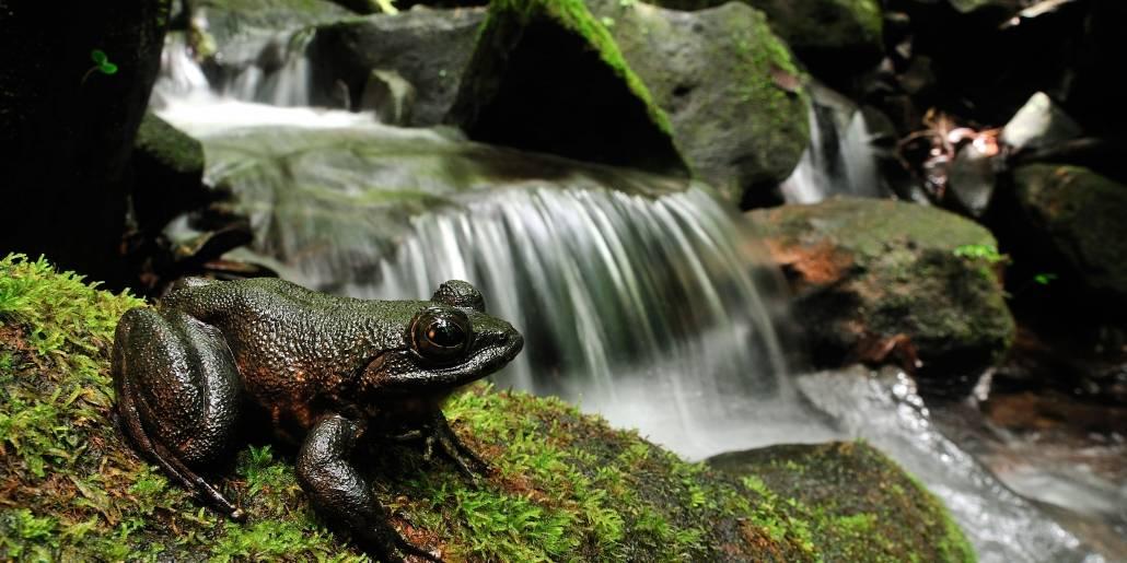 Foto: Thomas Marent/RegnskogfondetOver halvdelen af artene vi kender lever i regnskoven. Foto: Thomas Marent/Regnskogfondet
