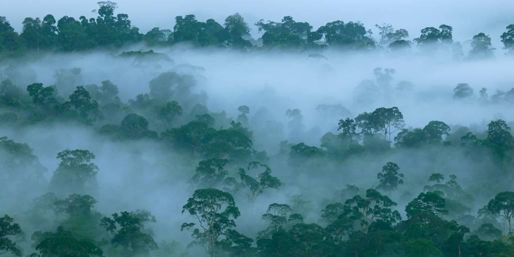 De tætte trekroner i regnskoven beskytter skovbunden og påvirker nedbør og skydannelse. Foto: Thomas Marent/Regnskogfondet