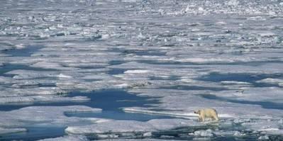 En isbjørn prøver at komme over usikre isflager. Foto: Magnus Andersen/Norsk Polarinstitutt