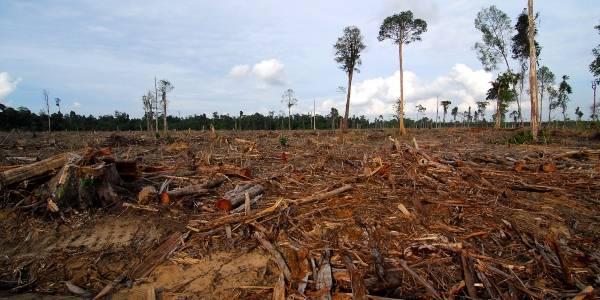 Skovhugst i et område i Malaysia. Foto: Heriyadi Asyari, Regnskogsfondet
