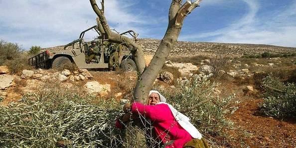 Olivenproduktion har været et vigtigt erhverv for palæstinenserne i mange hundrede år, men har længe været under hårdt pres fra den israelske besættelsespolitik. Foto: Frank M. Rafik/Flickr